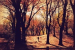 rachaelbaskerville park
